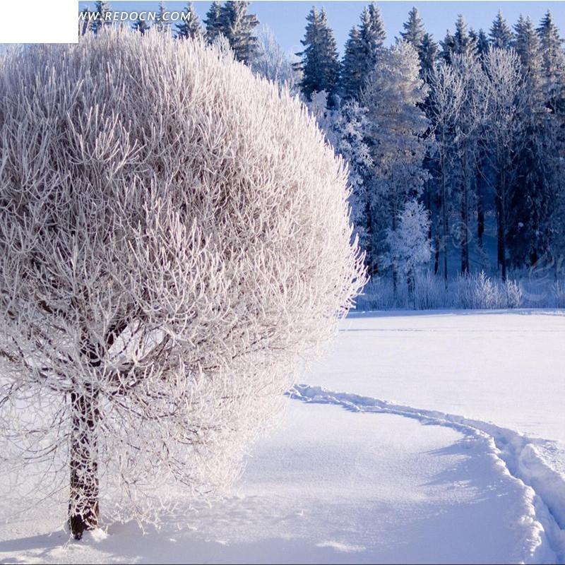 树林雪景淘宝主图背景
