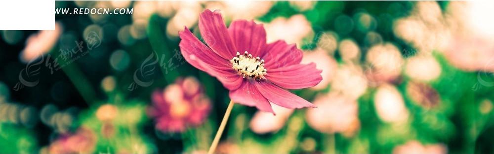 粉红花朵淘宝店招背景图片