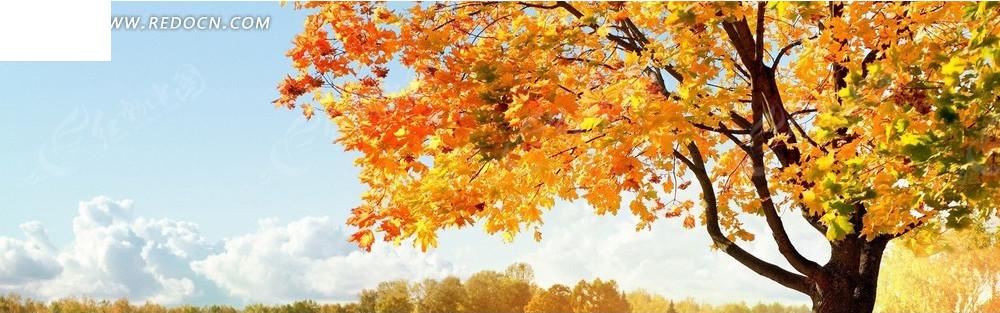 秋天的云和树淘宝店招背景jpg素材免费下载_红动网图片