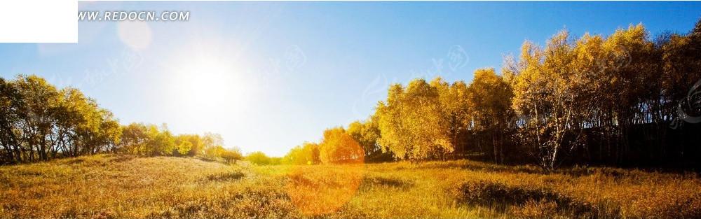 阳光下的树和田野淘宝店招背景