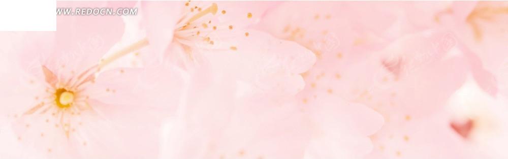 粉色系花朵淘宝店招背景jpg素材免费下载_红动网