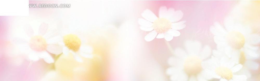 美丽的花朵淘宝店招背景jpg素材免费下载_红动网图片
