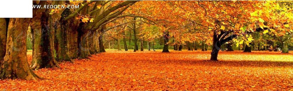 秋天的树和落叶淘宝店招背景jpg免费下载_淘宝海报图片