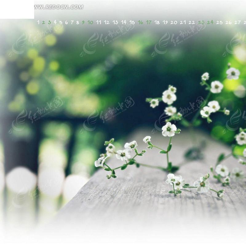 白色小花淘宝主图背景