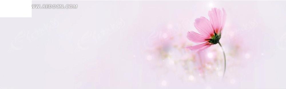 粉红花朵淘宝店招背景