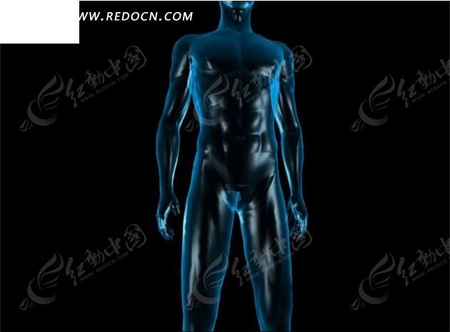 人体写真视频高清下载_人体全身器官透视视频素材