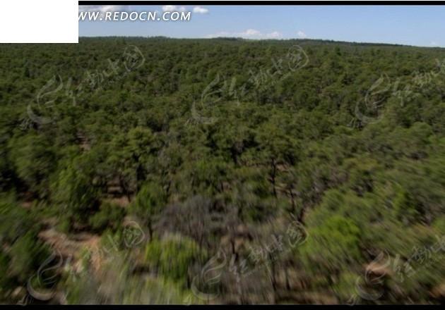 航拍中国森林地貌视频图片
