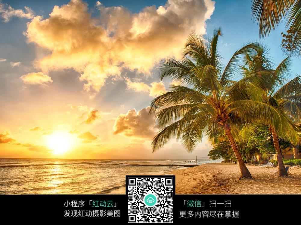 海边日出椰子树图片