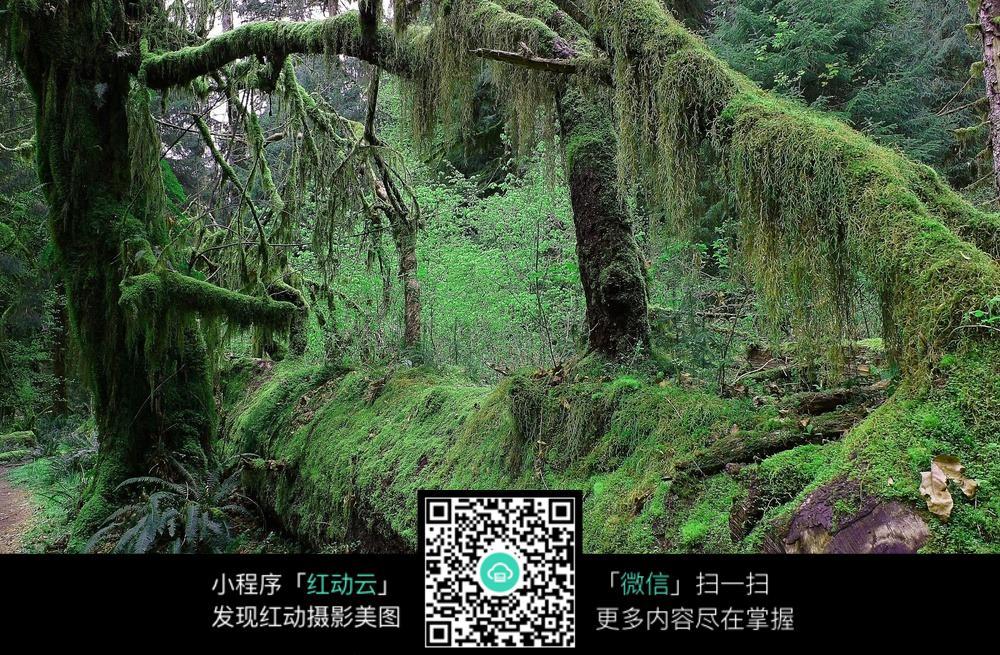 绿色原始森林树木