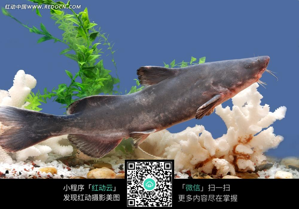 壁纸 动物 海底 海底世界 海洋馆 水族馆 鱼 鱼类 1000_699