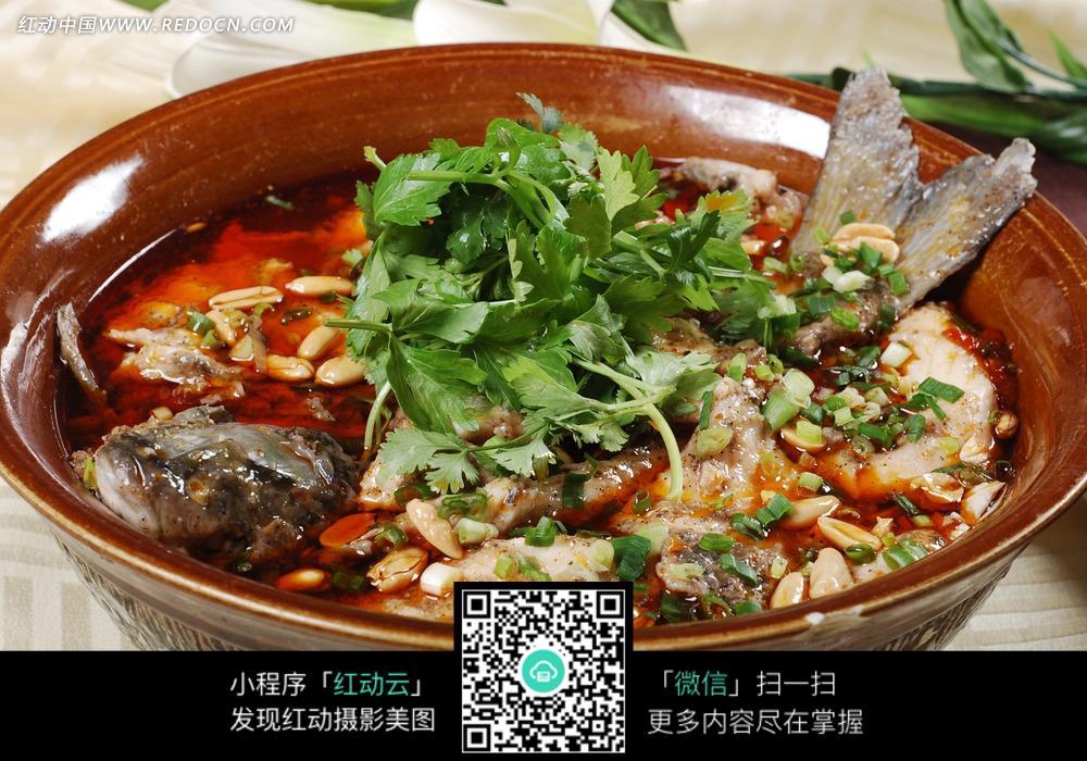 毛肚盆盆鱼图片