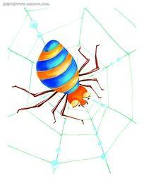 结网的蜘蛛图片