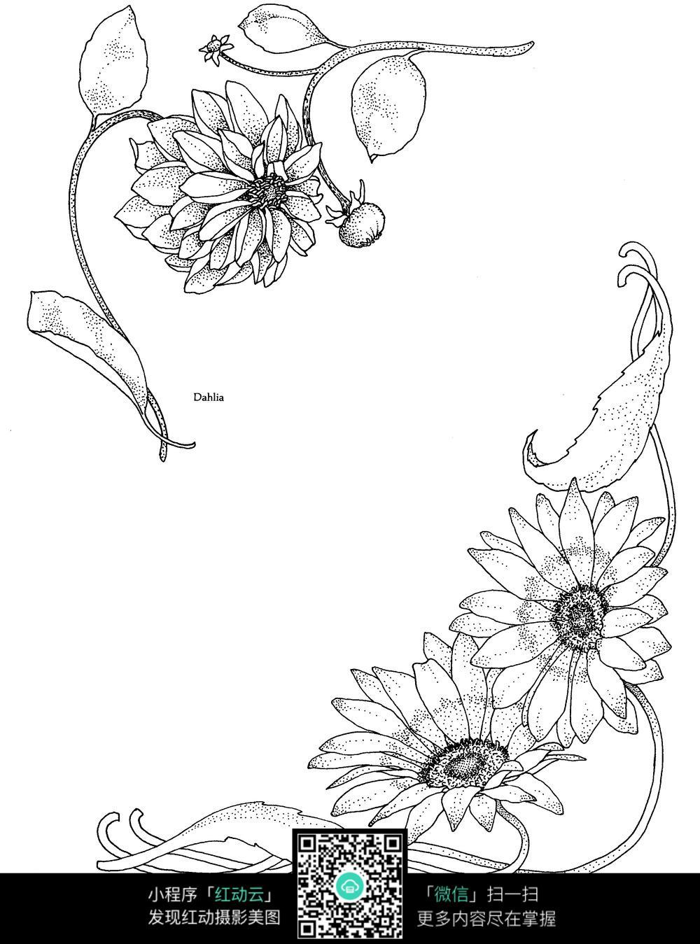 免费素材 图片素材 背景花边 花纹花边 手绘菊花  请您分享: 红动网