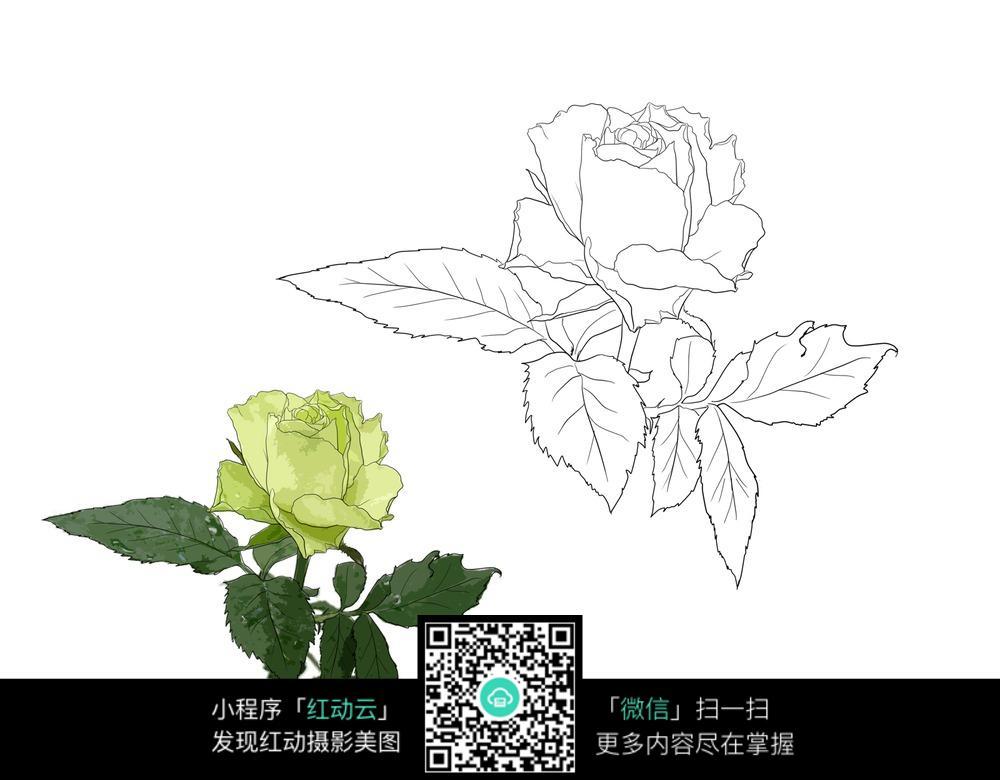 手绘花朵线稿插画设计文件展示_花纹花边_红动手机版