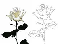 一枝玫瑰花线稿