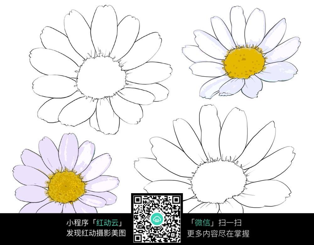 波斯菊花手绘线描