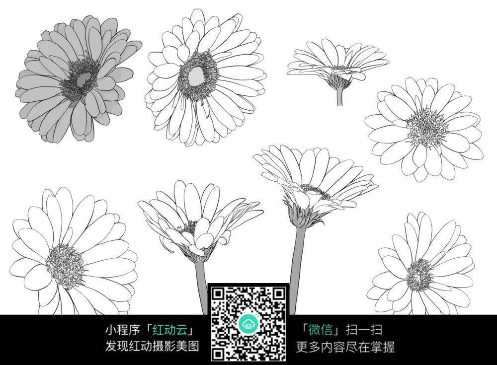 您当前访问素材主题是波斯菊菊花植物线描,编号是3704562,文件格式jpg