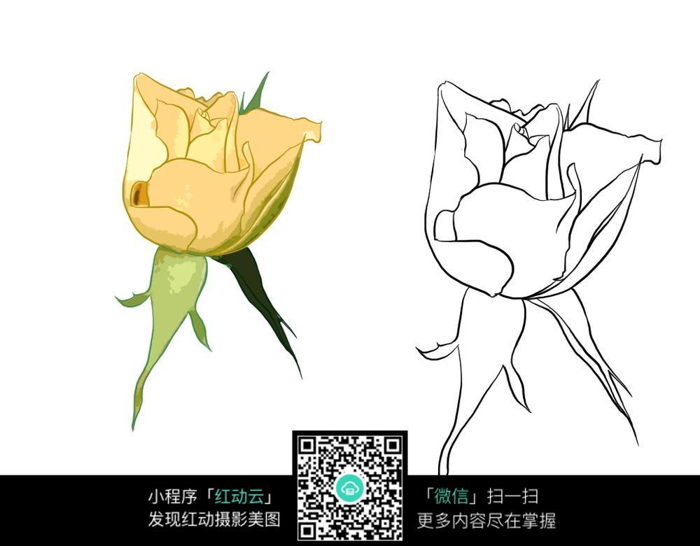含苞待放的月季花手绘线稿_花草树木图片