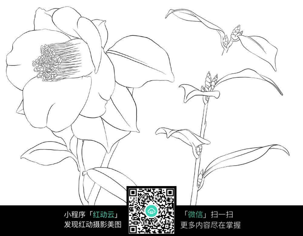 花卉植物花朵线描手绘