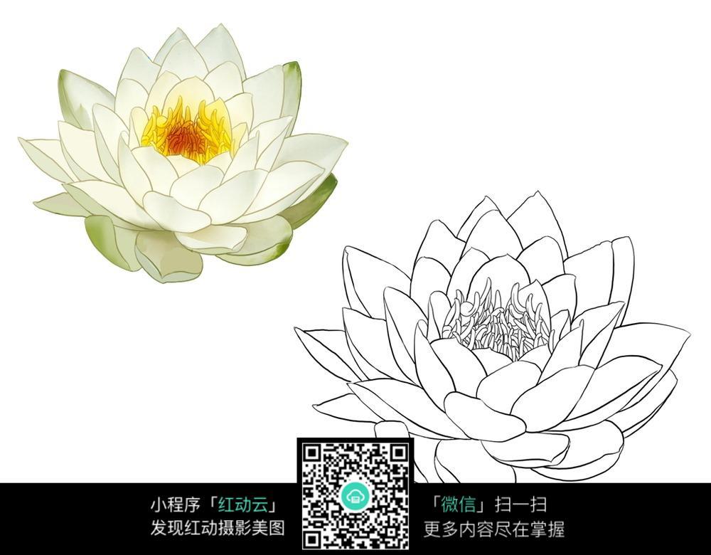 莲花线描手绘上色练习图片