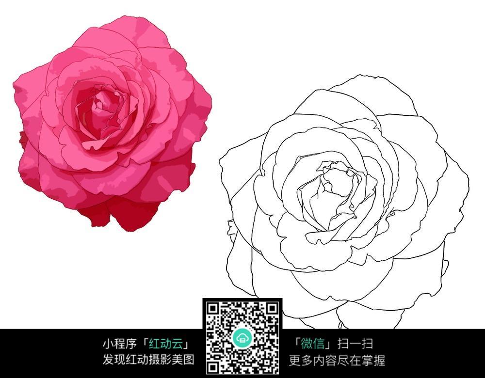 玫瑰花开手绘线描 花草树木图片 红动手机版图片