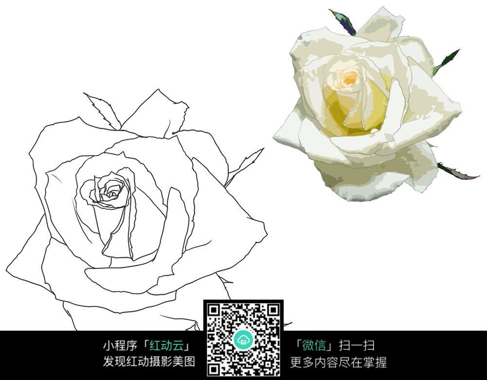 手绘黑白花图片素材