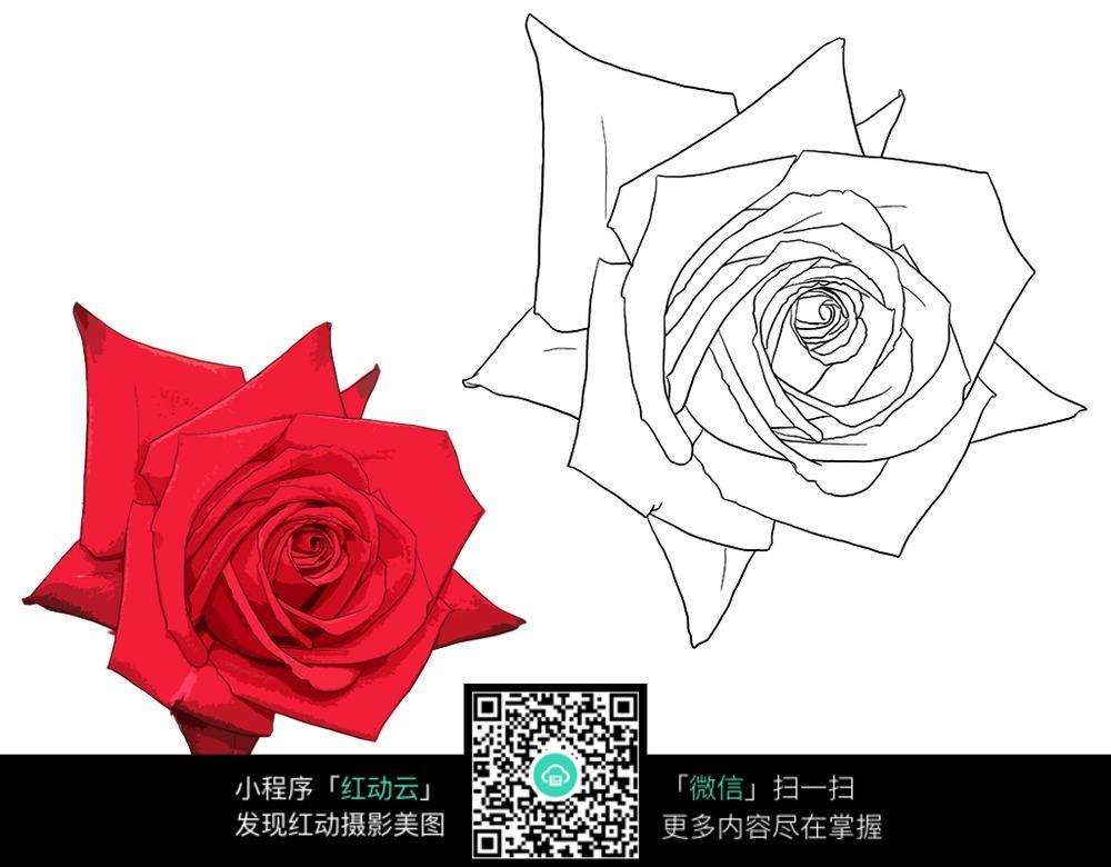 玫瑰花手绘线稿