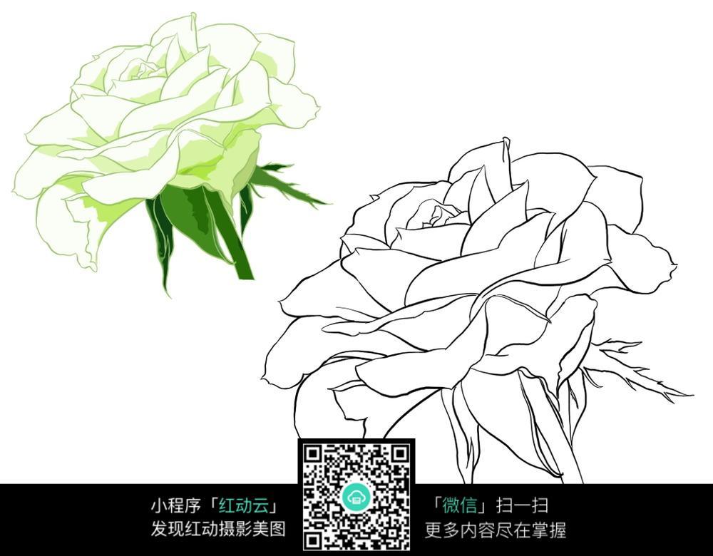 玫瑰花线描手绘素材图片