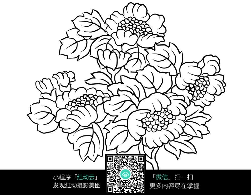 牡丹花线描素材