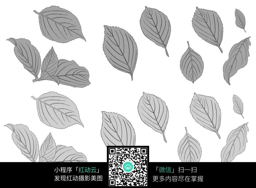 手绘各种树叶线描