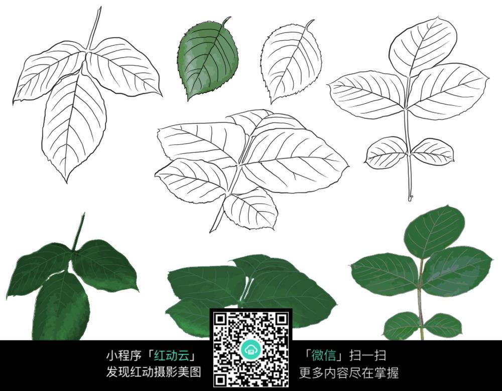 手绘叶子与上色后的叶子图片