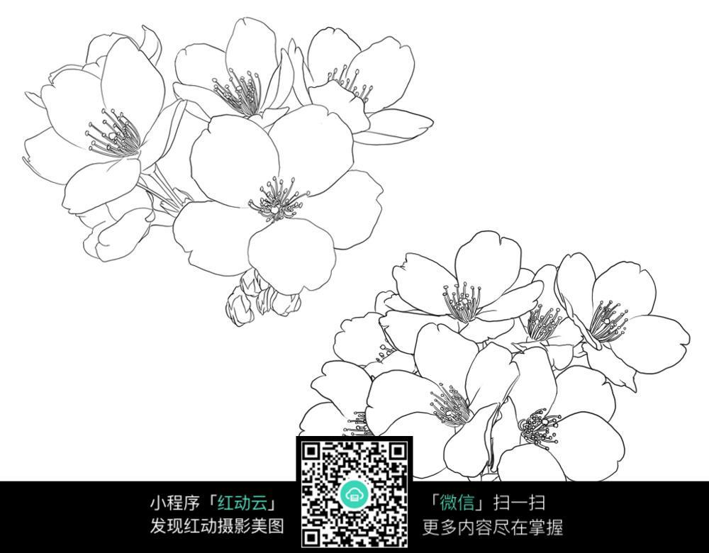 樱花 简笔画图片