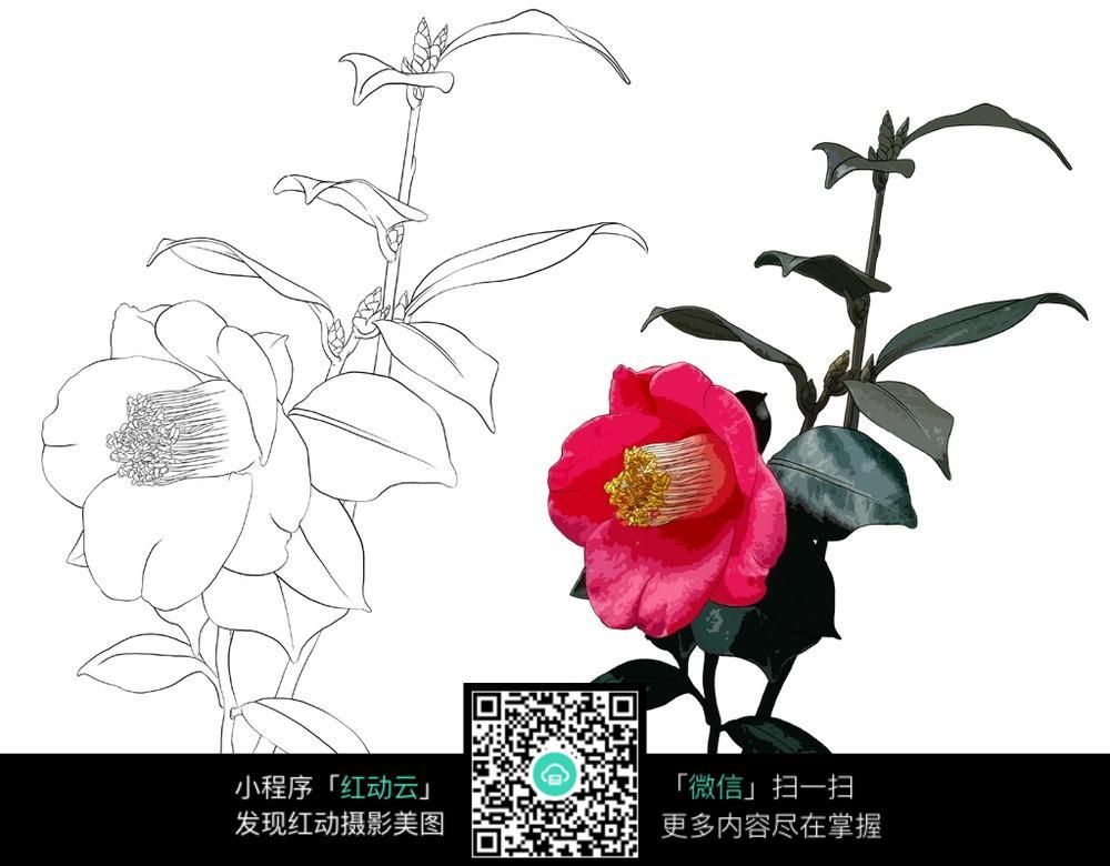 花卉花朵植物线描