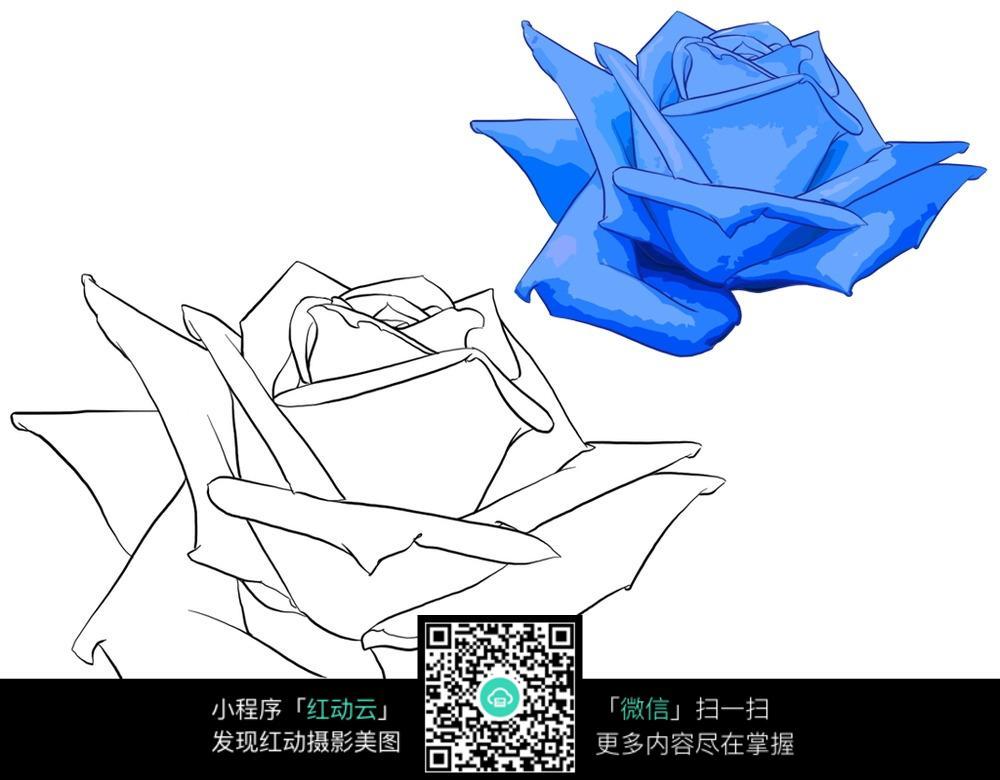 免费素材图片图片衣服漫画玫瑰花草素材手绘漫画与线稿图树木插画蓝色玫瑰图片