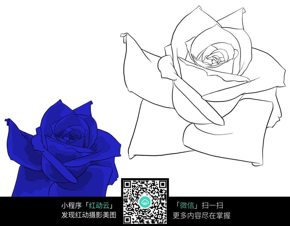 手绘宝蓝色玫瑰花与线稿图