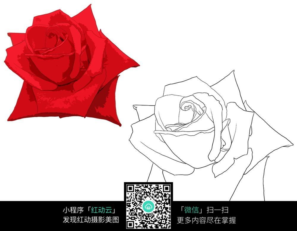 手绘红色玫瑰与线稿图_花草树木图片