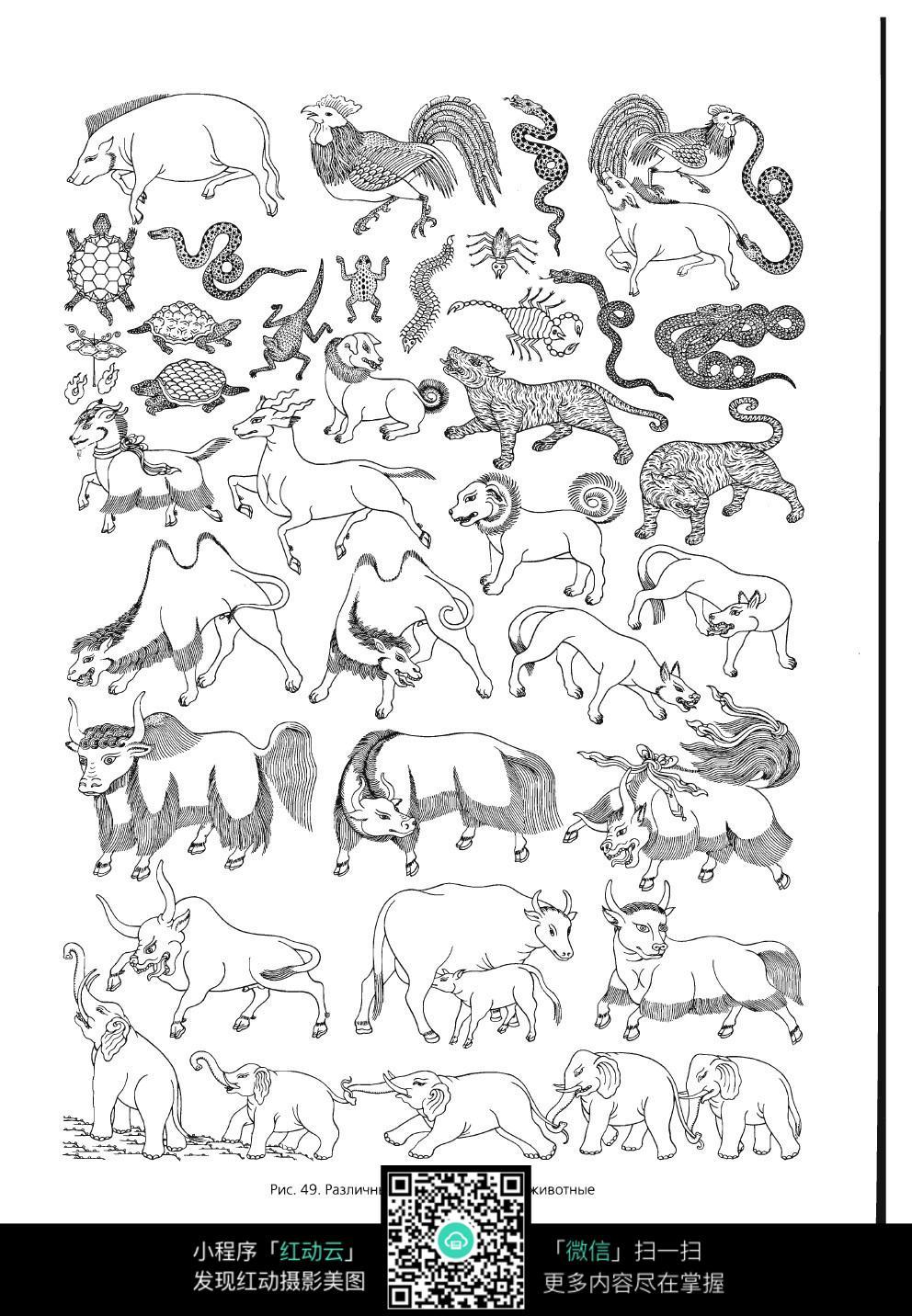 西藏百科全书之动物线描