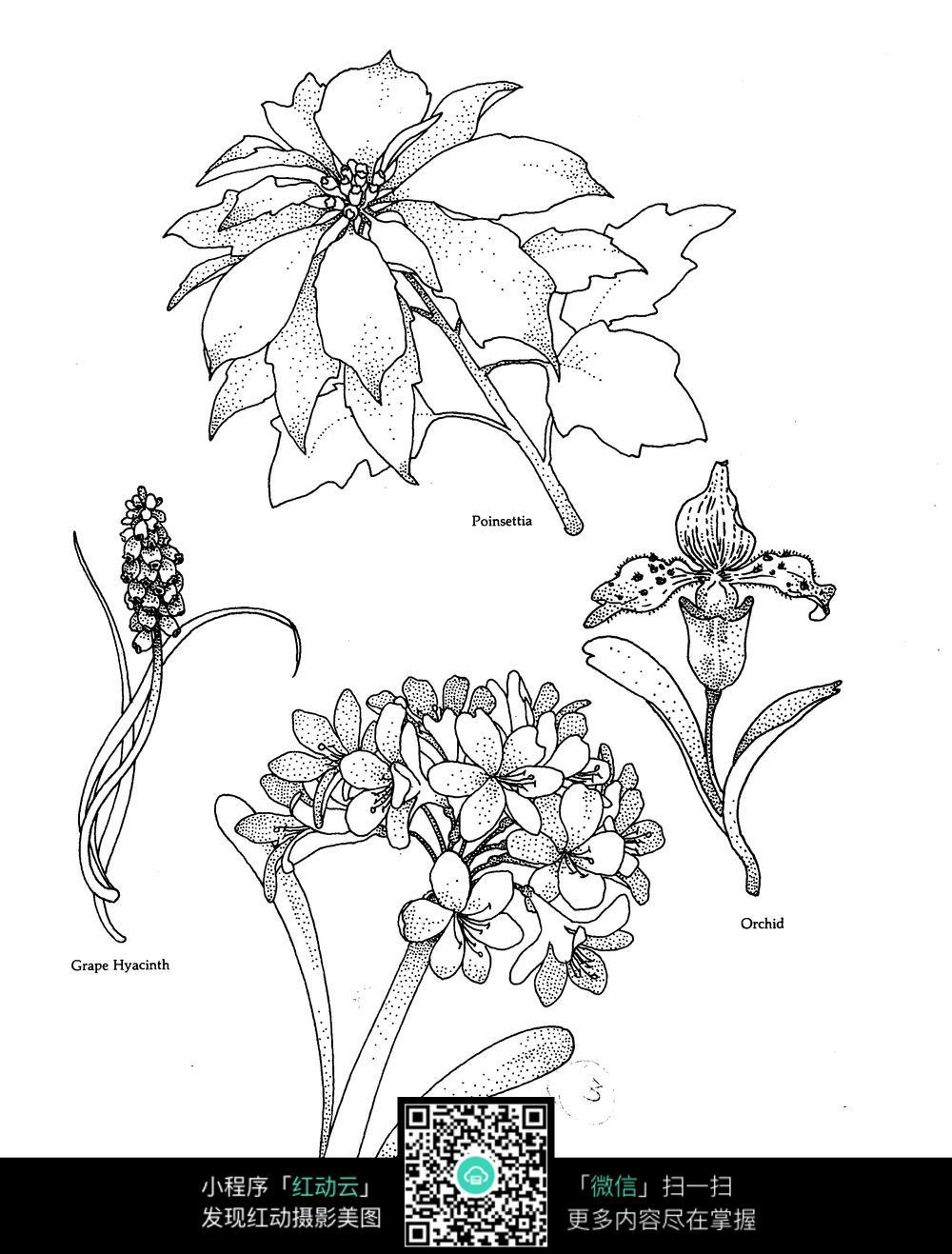 花草刺绣图案素材图片