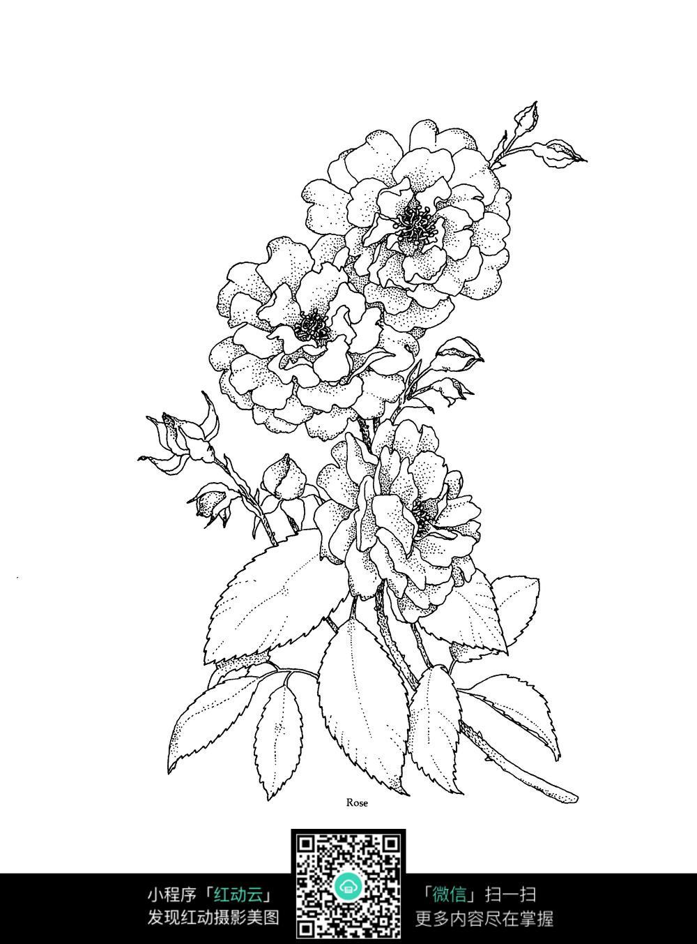 花朵刺绣图案素材