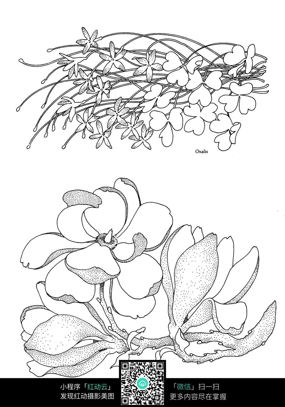 花朵和花草刺绣图案素材