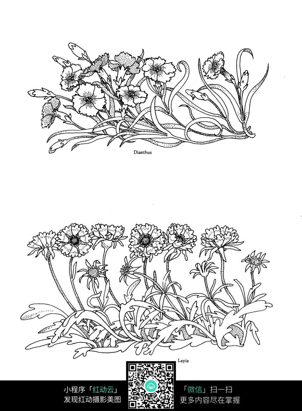 花朵花草刺绣图案素材