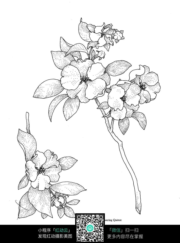 花朵树枝刺绣图案素材