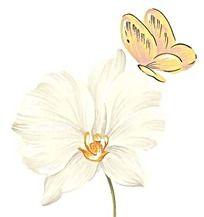 手绘白色蝴蝶兰与黄蝴蝶