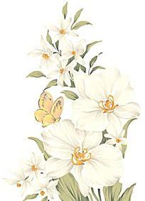 手绘蝴蝶兰花束与蝴蝶