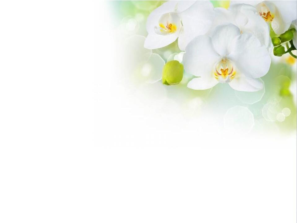 淡雅白色花纹ppt模板免费下载_其他ppt素材图片
