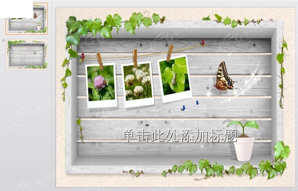 大自然照片葡萄藤边框橱窗背景ppt模版