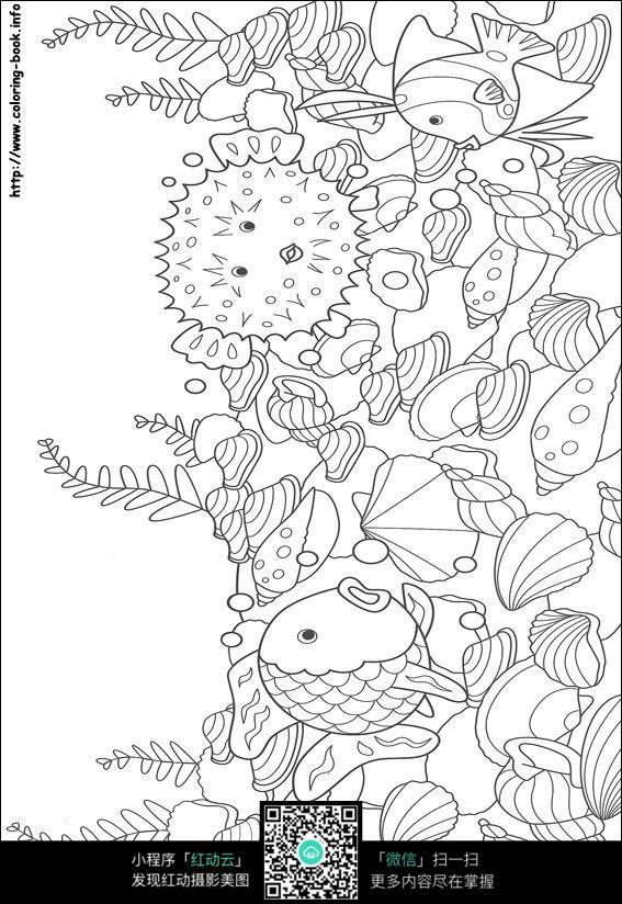 贝壳手绘三视图