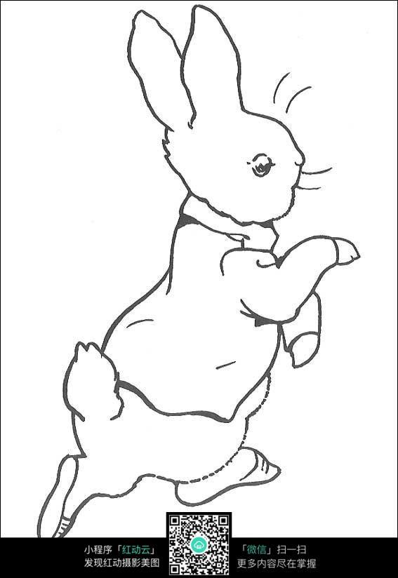 小兔子线描_