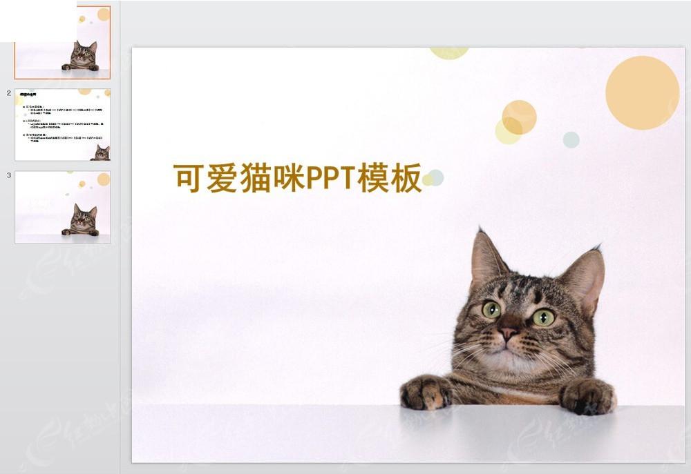 可爱猫咪ppt模版图片