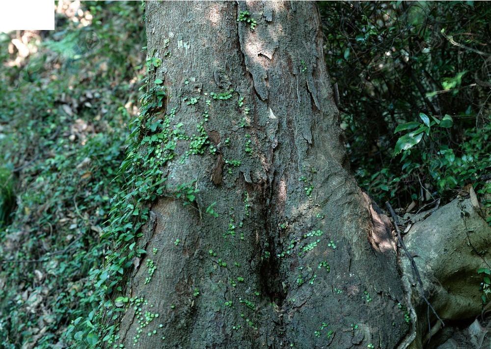 丛林树木贴图jpg免费下载_材质贴图素材